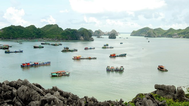 Lively experience at Cat Ba World Biosphere Reserve, travel news, Vietnam guide, Vietnam airlines, Vietnam tour, tour Vietnam, Hanoi, ho chi minh city, Saigon, travelling to Vietnam, Vietnam travelling, Vietnam travel, vn news