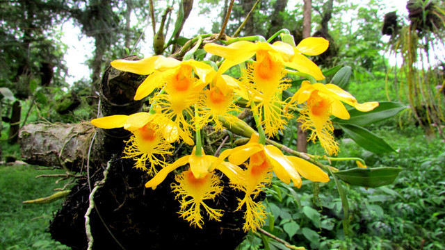 Sublime wild orchids on show in Sapa, entertainment events, entertainment news, entertainment activities, what's on, Vietnam culture, Vietnam tradition, vn news, Vietnam beauty, news Vietnam, Vietnam news, Vietnam net news, vietnamnet news, vietnamnet