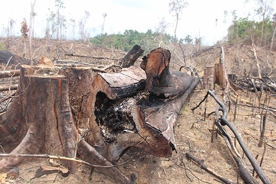 Flood rises due to loss of 1.7mln ha protection forest, Vietnam environment, climate change in Vietnam, Vietnam weather, Vietnam climate, pollution in Vietnam, environmental news, sci-tech news, vietnamnet bridge, english news, Vietnam news, news Vietnam,