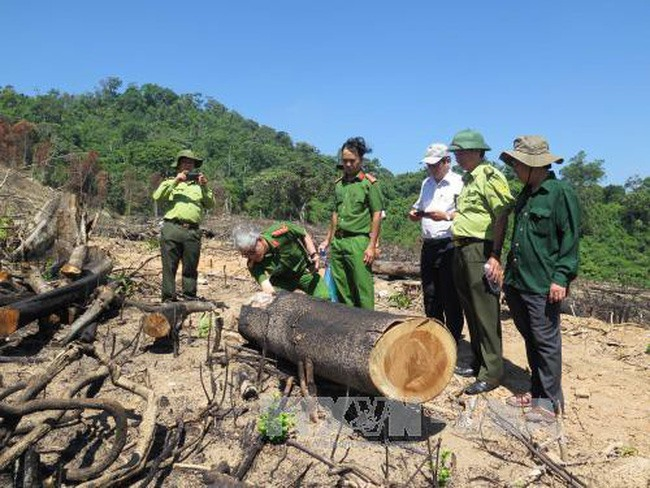 Investigation of forest destruction be speeded up: Deputy PM, Vietnam environment, climate change in Vietnam, Vietnam weather, Vietnam climate, pollution in Vietnam, environmental news, sci-tech news, vietnamnet bridge, english news, Vietnam news, news Vi