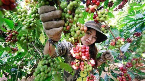 First Vietnamese Coffee Day feted, vietnam economy, business news, vn news, vietnamnet bridge, english news, Vietnam news, news Vietnam, vietnamnet news, vn news, Vietnam net news, Vietnam latest news, Vietnam breaking news
