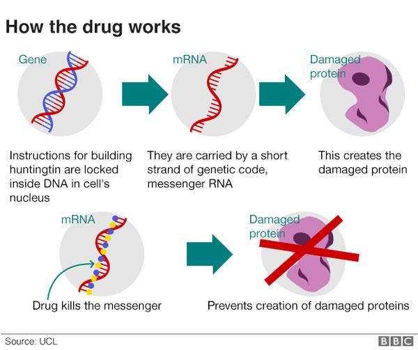 Neurodegenerative diseases, huntingtin gene, brain, toxic proteins