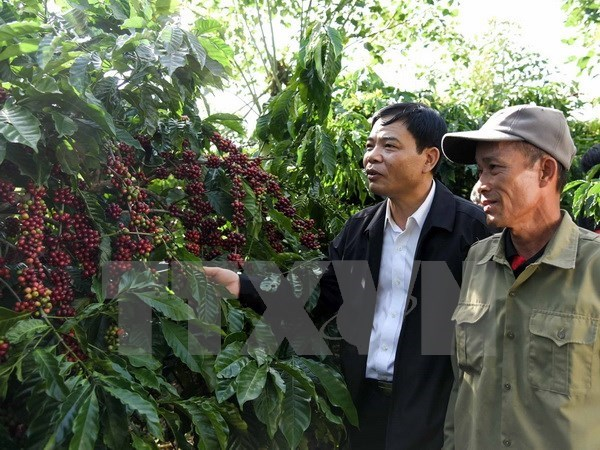 Measures sought to increase added value of coffee, Forum connects Vietnamese startups in US and VN, Vietnamese goods enjoy promotion gains, 33 percent of farming cooperatives efficiently operate: Ministry