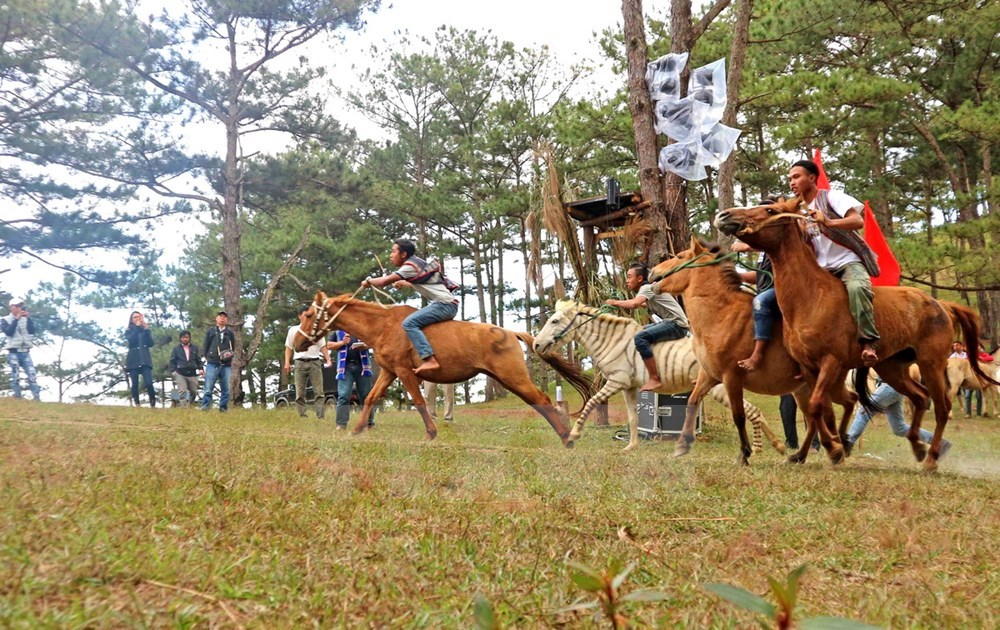 Spectacular horse racing without saddles on Da Lat's pink grass hill, social news, vietnamnet bridge, english news, Vietnam news, news Vietnam, vietnamnet news, Vietnam net news, Vietnam latest news, vn news, Vietnam breaking news