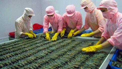 China to become second largest importer of Vietnam shrimp, vietnam economy, business news, vn news, vietnamnet bridge, english news, Vietnam news, news Vietnam, vietnamnet news, vn news, Vietnam net news, Vietnam latest news, Vietnam breaking news