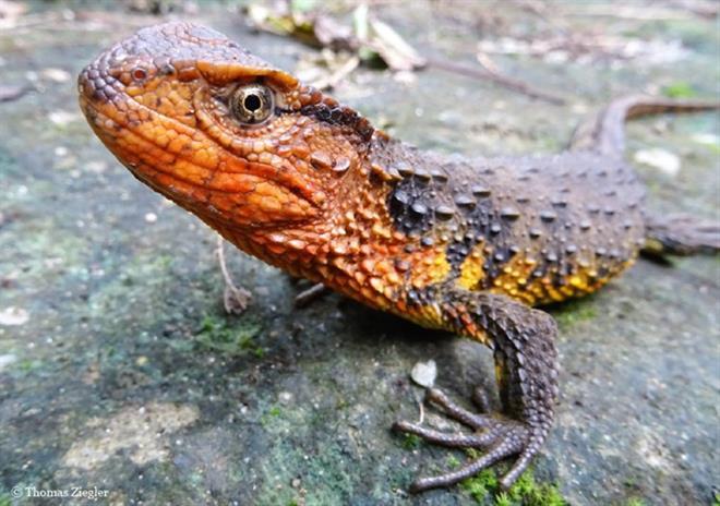 115 species found in Indo-China: WWF, IT news, sci-tech news, vietnamnet bridge, english news, Vietnam news, news Vietnam, vietnamnet news, Vietnam net news, Vietnam latest news, Vietnam breaking news, vn news
