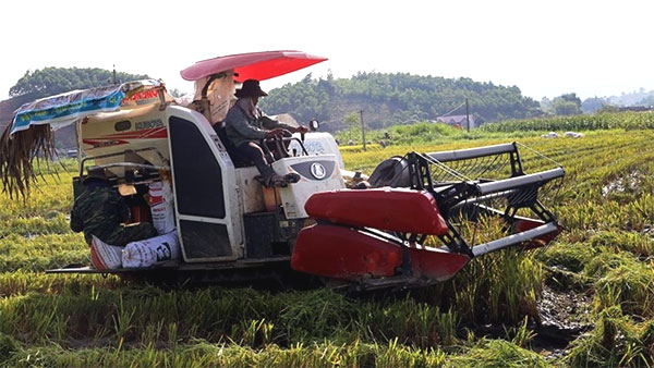 Restructuring the agriculture sector, organic farming, Vietnam economy, Vietnamnet bridge, English news about Vietnam, Vietnam news, news about Vietnam, English news, Vietnamnet news, latest news on Vietnam, Vietnam