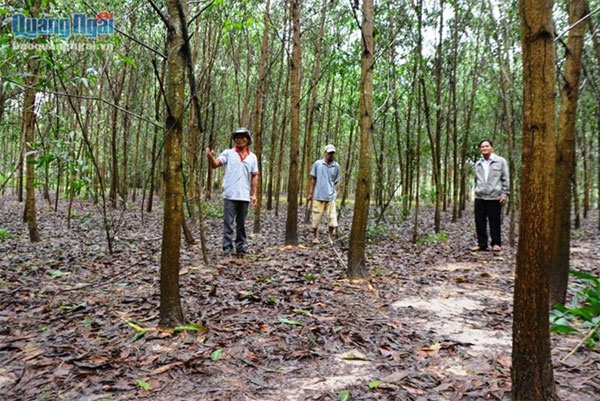 Help poor students, grow forest, Vietnam economy, Vietnamnet bridge, English news about Vietnam, Vietnam news, news about Vietnam, English news, Vietnamnet news, latest news on Vietnam, Vietnam