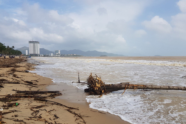 Nha Trang Beach covered in driftwood after rains, environmental news, sci-tech news, vietnamnet bridge, english news, Vietnam news, news Vietnam, vietnamnet news, Vietnam net news, Vietnam latest news, Vietnam breaking news, vn news
