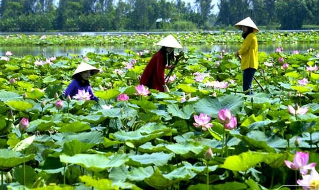 Tan Lap Floating Village - Ideal getaway in Mekong Delta, travel news, Vietnam guide, Vietnam airlines, Vietnam tour, tour Vietnam, Hanoi, ho chi minh city, Saigon, travelling to Vietnam, Vietnam travelling, Vietnam travel, vn news