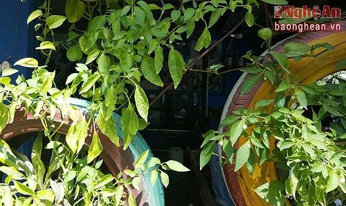 Nghe An man's tyre-made garden, social news, vietnamnet bridge, english news, Vietnam news, news Vietnam, vietnamnet news, Vietnam net news, Vietnam latest news, vn news, Vietnam breaking news