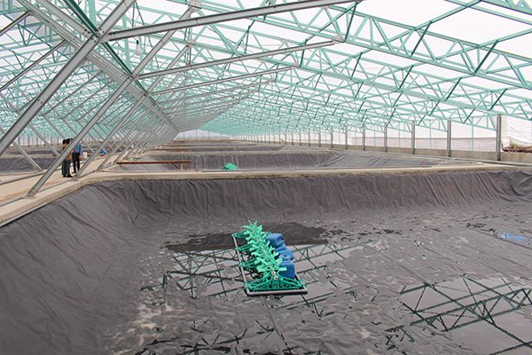 VND1-trillion shrimp farming greenhouse to be launched this month, vietnam economy, business news, vn news, vietnamnet bridge, english news, Vietnam news, news Vietnam, vietnamnet news, vn news, Vietnam net news, Vietnam latest news, Vietnam breaking news