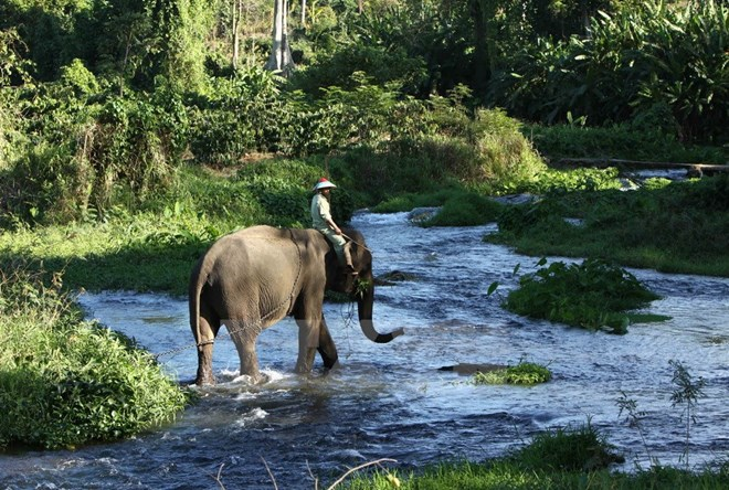 Dak Lak province moves to conserve elephants, Vietnam environment, climate change in Vietnam, Vietnam weather, Vietnam climate, pollution in Vietnam, environmental news, sci-tech news, vietnamnet bridge, english news, Vietnam news, news Vietnam, vietnamne