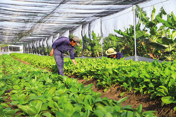 Agriculture revival with private funds, vietnam economy, business news, vn news, vietnamnet bridge, english news, Vietnam news, news Vietnam, vietnamnet news, vn news, Vietnam net news, Vietnam latest news, Vietnam breaking news