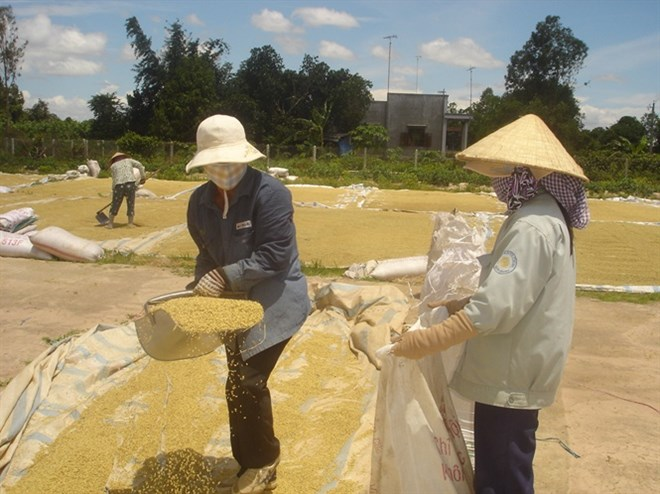 Auspicious start to Vietnamese rice export in 2018, vietnam economy, business news, vn news, vietnamnet bridge, english news, Vietnam news, news Vietnam, vietnamnet news, vn news, Vietnam net news, Vietnam latest news, Vietnam breaking news
