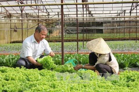 VN plans 500 hi-tech agricultural cooperatives by 2020