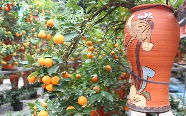 Brisk trade in Hung Yen bonsai kumquat trees as Tet nears, social news, vietnamnet bridge, english news, Vietnam news, news Vietnam, vietnamnet news, Vietnam net news, Vietnam latest news, vn news, Vietnam breaking news