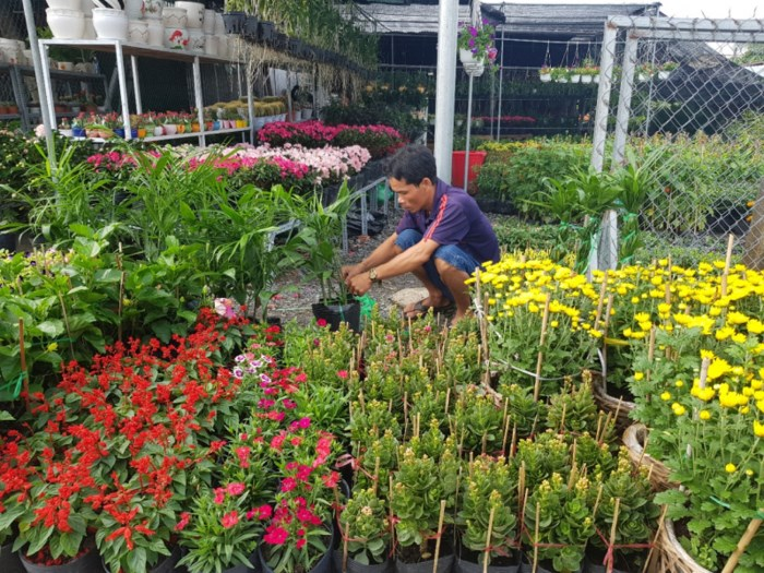 Sa Dec Flower Village in full bloom, travel news, Vietnam guide, Vietnam airlines, Vietnam tour, tour Vietnam, Hanoi, ho chi minh city, Saigon, travelling to Vietnam, Vietnam travelling, Vietnam travel, vn news