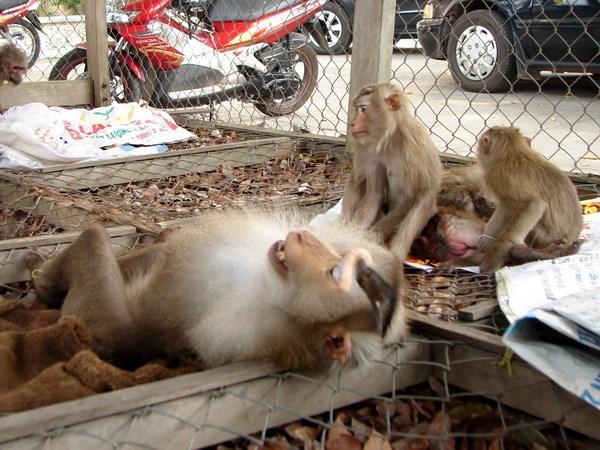Wild animals handed over to Phong Nha – Ke Bang national park, Vietnam environment, climate change in Vietnam, Vietnam weather, Vietnam climate, pollution in Vietnam, environmental news, sci-tech news, vietnamnet bridge, english news, Vietnam news, news