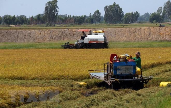 Mekong Delta seeks to turn agriculture challenges into opportunities, vietnam economy, business news, vn news, vietnamnet bridge, english news, Vietnam news, news Vietnam, vietnamnet news, vn news, Vietnam net news, Vietnam latest news, Vietnam breaking n