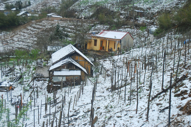Snow falls in Sapa, social news, vietnamnet bridge, english news, Vietnam news, news Vietnam, vietnamnet news, Vietnam net news, Vietnam latest news, vn news, Vietnam breaking news