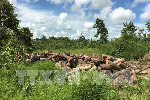 Illegal forest clearances worry Deputy PM, Vietnam environment, climate change in Vietnam, Vietnam weather, Vietnam climate, pollution in Vietnam, environmental news, sci-tech news, vietnamnet bridge, english news, Vietnam news, news Vietnam, vietnamnet n