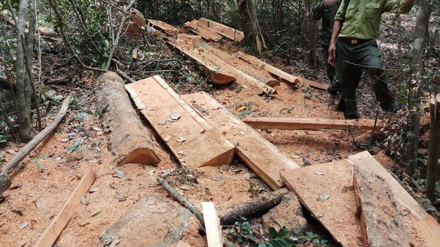 Investigation begins into deforestation inside national park, environmental news, sci-tech news, vietnamnet bridge, english news, Vietnam news, news Vietnam, vietnamnet news, Vietnam net news, Vietnam latest news, Vietnam breaking news, vn news
