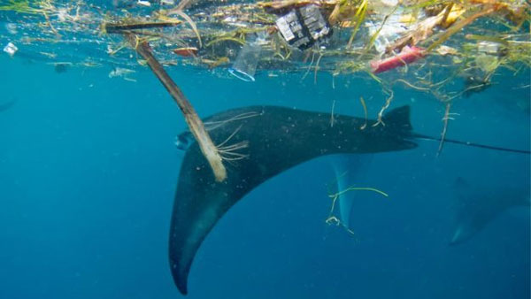 Plastic pollution, threat to ocean giants