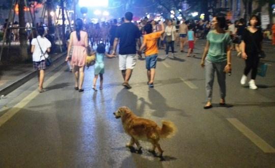 Hanoi tightens control over pet dogs and cats, social news, vietnamnet bridge, english news, Vietnam news, news Vietnam, vietnamnet news, Vietnam net news, Vietnam latest news, vn news, Vietnam breaking news