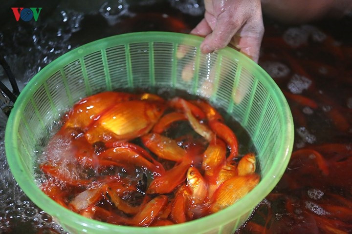 Traders flood So Thuong fish market as Kitchen God Day nears, social news, vietnamnet bridge, english news, Vietnam news, news Vietnam, vietnamnet news, Vietnam net news, Vietnam latest news, vn news, Vietnam breaking news