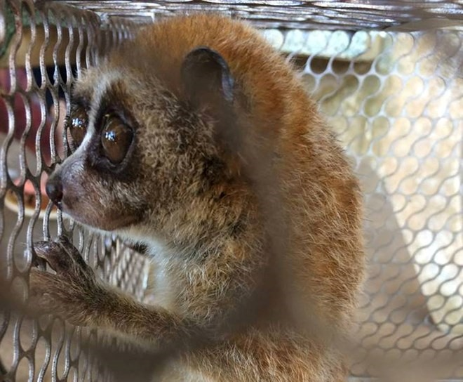 72 wild animals rescued in January, Vietnam environment, climate change in Vietnam, Vietnam weather, Vietnam climate, pollution in Vietnam, environmental news, sci-tech news, vietnamnet bridge, english news, Vietnam news, news Vietnam, vietnamnet news,