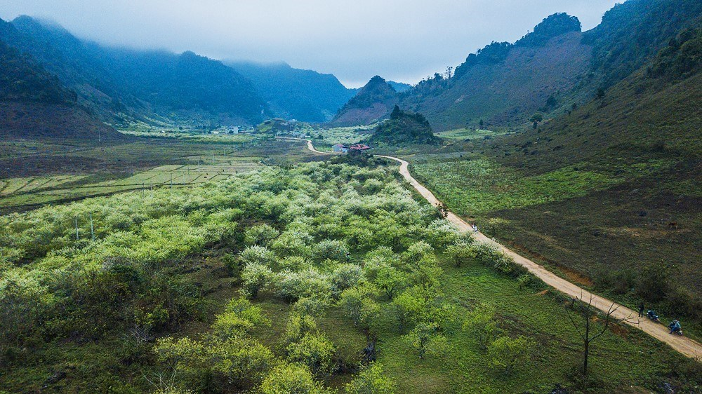 Moc Chau full of white apricot blossoms in spring, travel news, Vietnam guide, Vietnam airlines, Vietnam tour, tour Vietnam, Hanoi, ho chi minh city, Saigon, travelling to Vietnam, Vietnam travelling, Vietnam travel, vn news