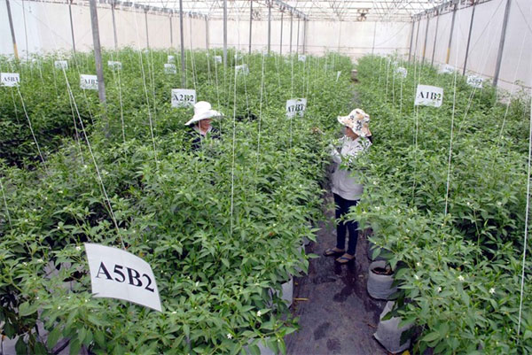 Hi-tech methods, raise production value of farm produce, Vietnam economy, Vietnamnet bridge, English news about Vietnam, Vietnam news, news about Vietnam, English news, Vietnamnet news, latest news on Vietnam, Vietnam