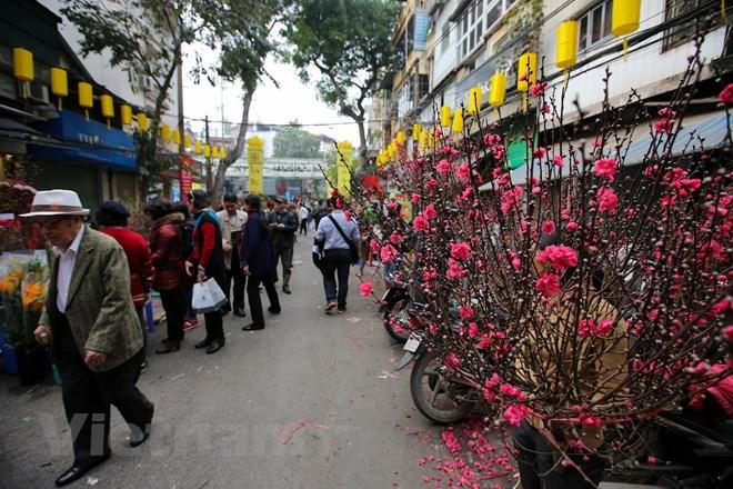 Hang Luoc flower market busy ahead of Tet festival