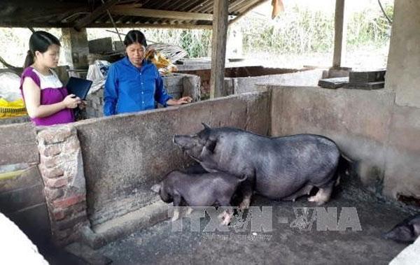 Volunteer project improving life in poor areas - News VietNamNet