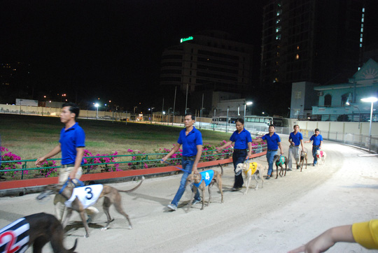Dog races in Vung Tau City, entertainment events, entertainment news, entertainment activities, what's on, Vietnam culture, Vietnam tradition, vn news, Vietnam beauty, news Vietnam, Vietnam news, Vietnam net news, vietnamnet news, vietnamnet bridge
