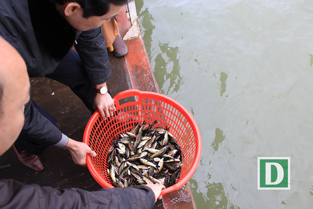 Over five tonnes of fish released to Red River, social news, vietnamnet bridge, english news, Vietnam news, news Vietnam, vietnamnet news, Vietnam net news, Vietnam latest news, vn news, Vietnam breaking news