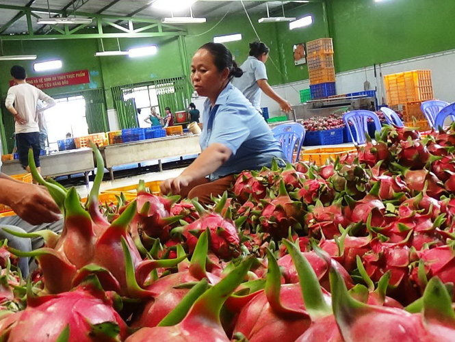 Shadow economy measuring scheme to be proposed in Q1, Ramping up tax audits to boost shrinking state budget, ROK at forefront of foreign investors in Vietnam, Garment exports to China show impressive growth