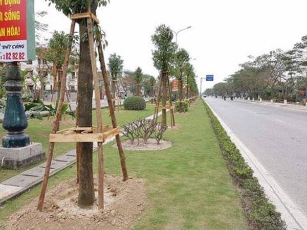 Hai Phong,  camphor trees, Vietnam economy, Vietnamnet bridge, English news about Vietnam, Vietnam news, news about Vietnam, English news, Vietnamnet news, latest news on Vietnam, Vietnam