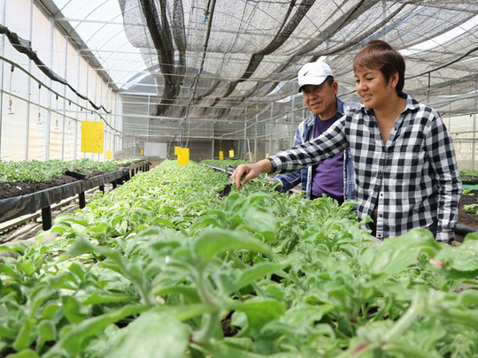 vietnam economy, business news, vn news, vietnamnet bridge, english news, Vietnam news, news Vietnam, vietnamnet news, vn news, Vietnam net news, Vietnam latest news, Vietnam breaking news, Da Lat, agriculture production, hi-tech agriculture