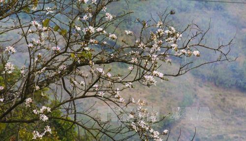Dien Bien celebrates Ban Flower Festival, travel news, Vietnam guide, Vietnam airlines, Vietnam tour, tour Vietnam, Hanoi, ho chi minh city, Saigon, travelling to Vietnam, Vietnam travelling, Vietnam travel, vn news