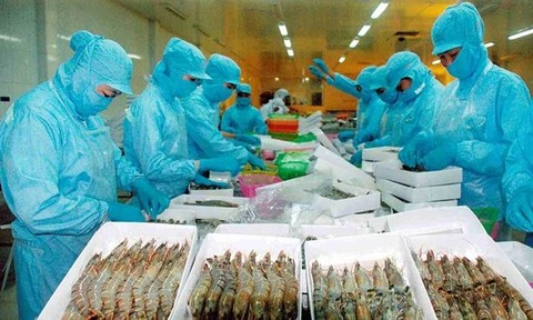 VASEP rejects DoC's preliminary results on Vietnamese shrimp, vietnam economy, business news, vn news, vietnamnet bridge, english news, Vietnam news, news Vietnam, vietnamnet news, vn news, Vietnam net news, Vietnam latest news, Vietnam breaking news