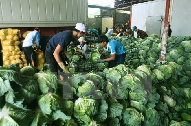 Vietnam targets $4.5 billion from farm produce exports by 2020, vietnam economy, business news, vn news, vietnamnet bridge, english news, Vietnam news, news Vietnam, vietnamnet news, vn news, Vietnam net news, Vietnam latest news, Vietnam breaking news
