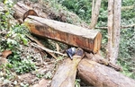 Hundreds of forest violation cases reported in Gia Lai