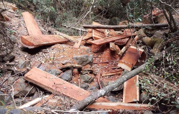 Dak Lak seeks to inventory damaged, encroached forestland
