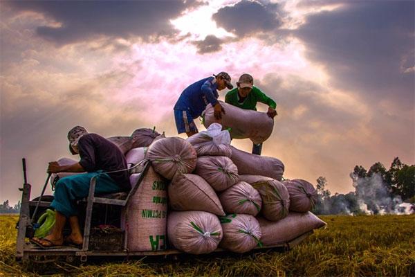 Vietnamese agriculture, organic fertilizer, Vietnam economy, Vietnamnet bridge, English news about Vietnam, Vietnam news, news about Vietnam, English news, Vietnamnet news, latest news on Vietnam, Vietnam
