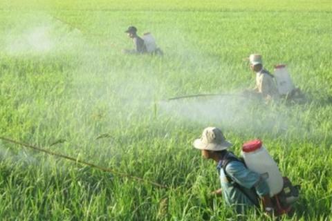 Vietnam spends $194 million on pesticides,vietnam economy, business news, vn news, vietnamnet bridge, english news, Vietnam news, news Vietnam, vietnamnet news, vn news, Vietnam net news, Vietnam latest news, Vietnam breaking news