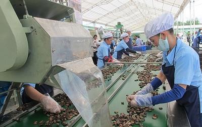 Binh Phuoc cashew gets GI certified, vietnam economy, business news, vn news, vietnamnet bridge, english news, Vietnam news, news Vietnam, vietnamnet news, vn news, Vietnam net news, Vietnam latest news, Vietnam breaking news