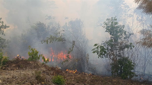 Violating forest protection laws, forest protection and fire safety, Vietnam economy, Vietnamnet bridge, English news about Vietnam, Vietnam news, news about Vietnam, English news, Vietnamnet news, latest news on Vietnam, Vietnam