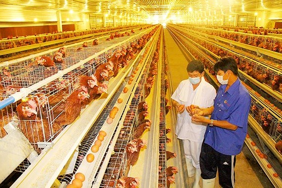 Poultry breeding heats up again, Nationwide rice exports hit 1.36mln tons, Vietnam & Australia mark 25 years of agriculture cooperation, Bao Viet Holdings' 2017 net profit up 37%